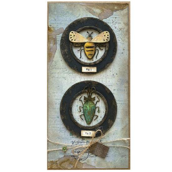 Malá sbírka brouků třeba pro vášnivého entomologa